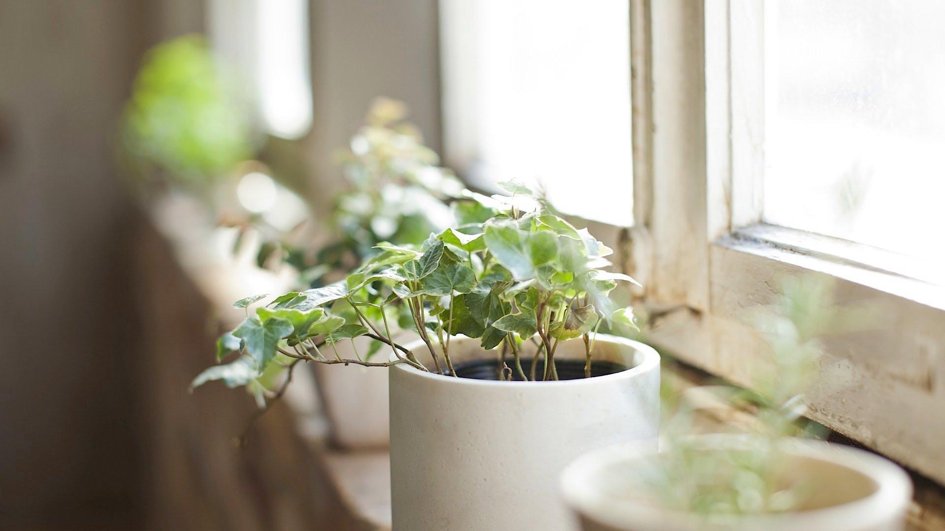 Домашние растения по фен шуй