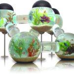 Интересный аквариум
