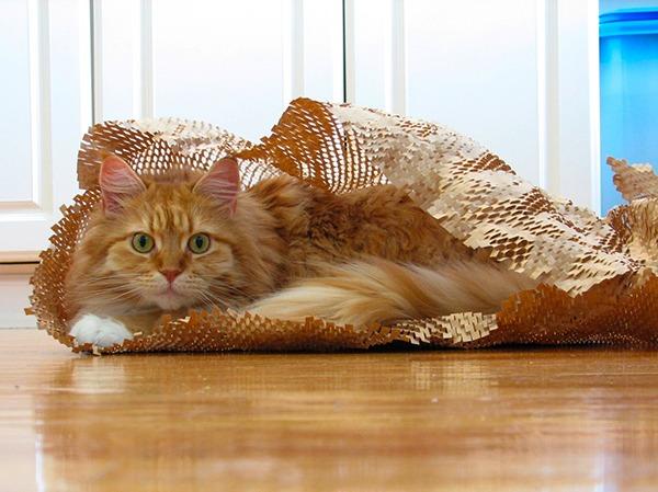 Оформление коридора при наличии кота