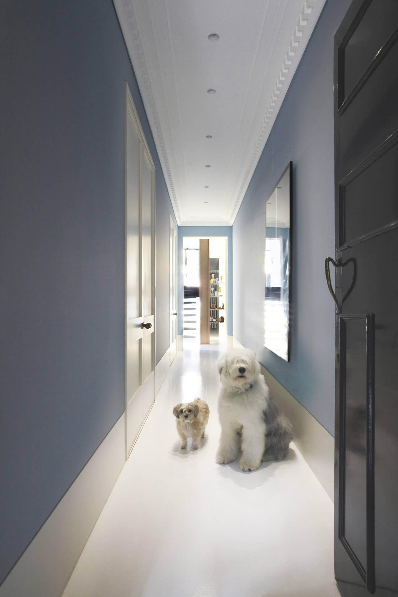 Оформление коридора в голубой цвет если в квартире собака