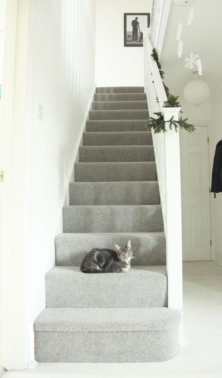 Оформление коридора ковролином при кошке