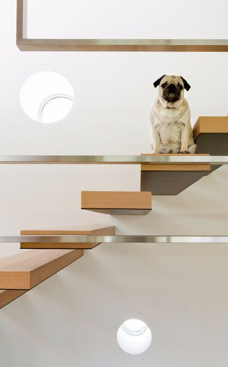 Оформление лестницы если в доме собака