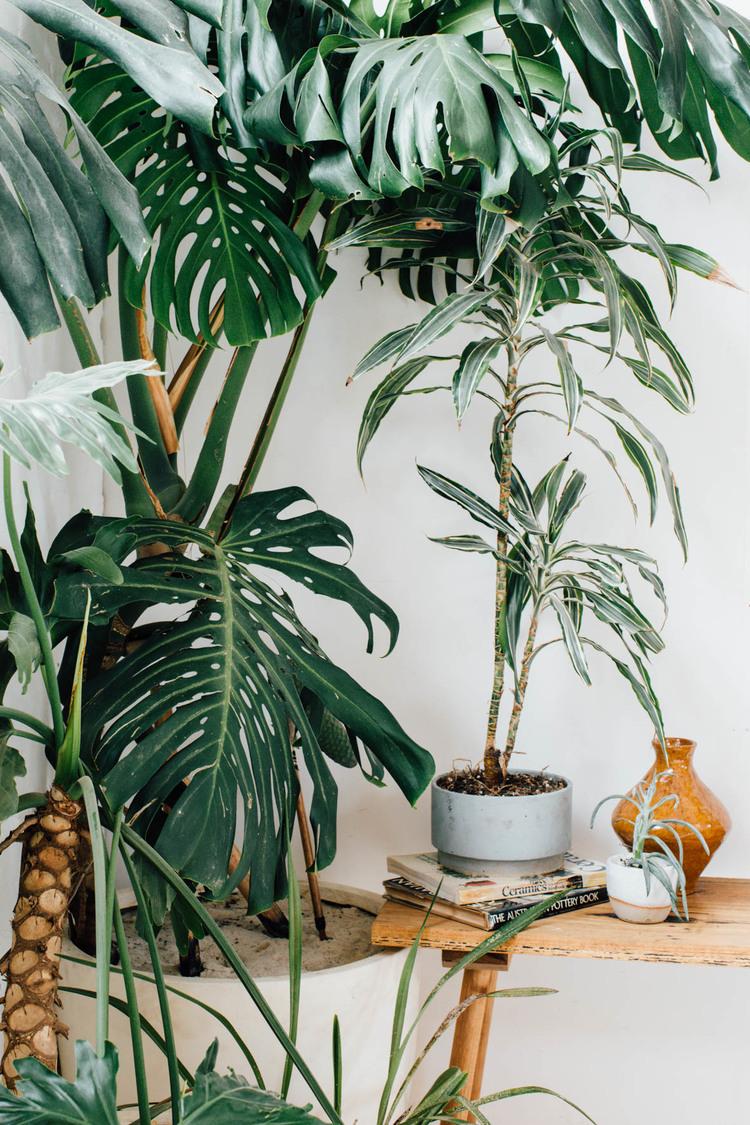 Большие растения в интерьере
