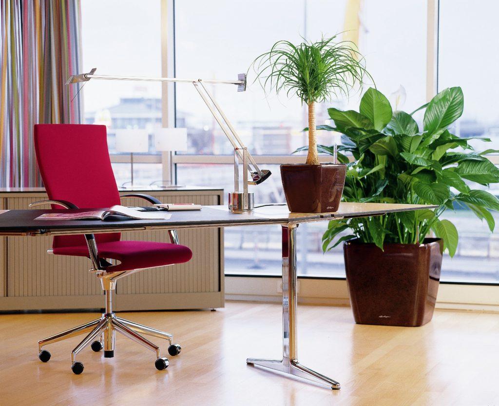 Интерьер кабинета с живыми растениями
