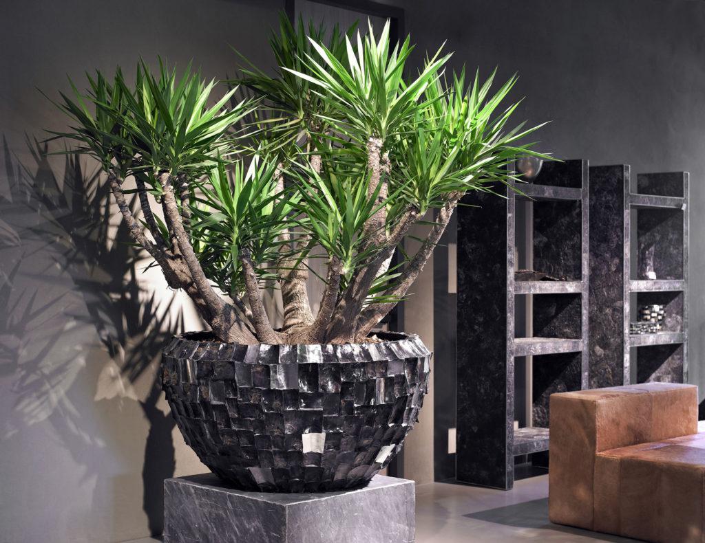 Растения делают интереснее минималистичный интерьер