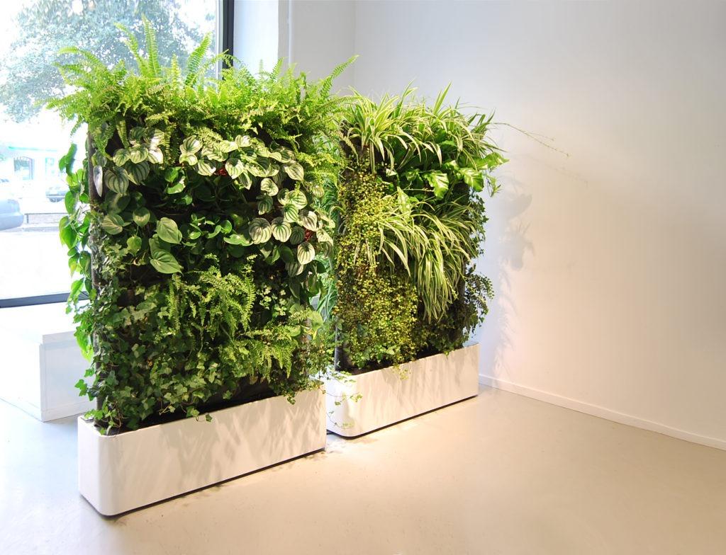 Декоративные стены из живых растений