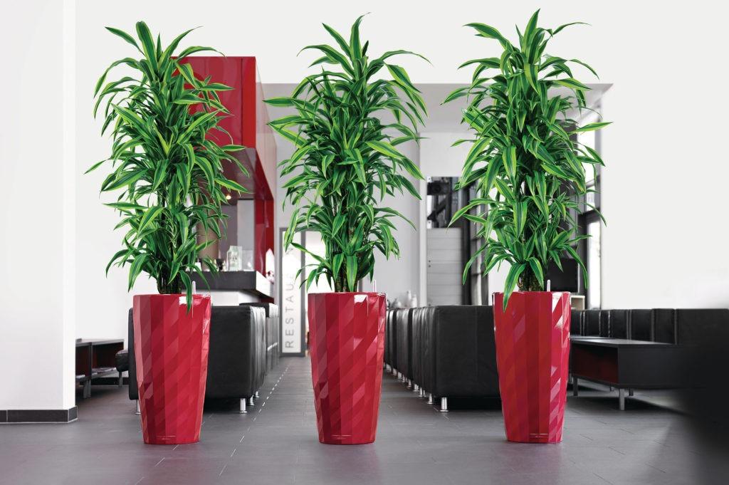 Высокие живые растения в ярких горшках