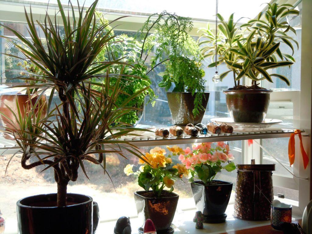 Кухонное окно можно украсить цветами