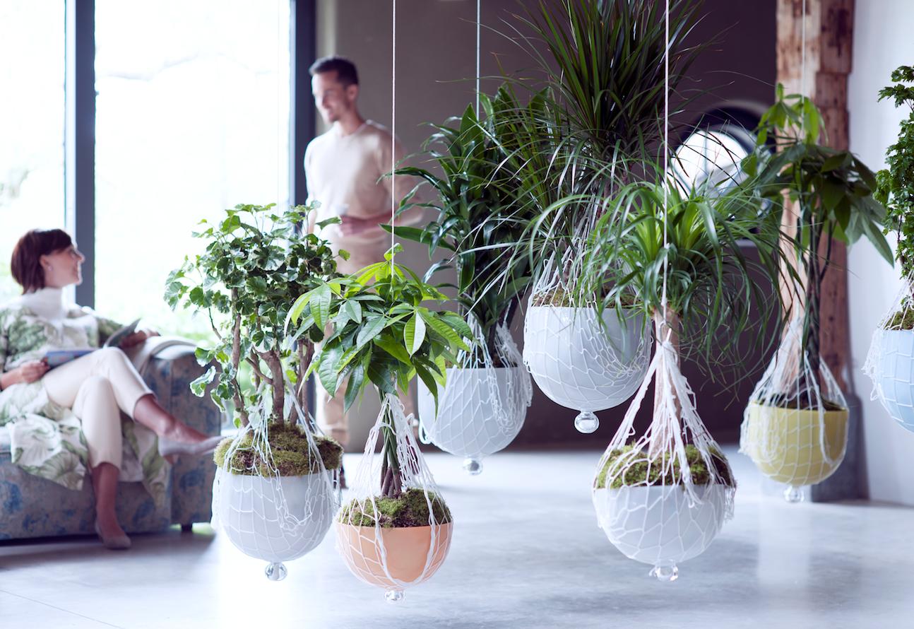 Комнатные растения в стиле лофт
