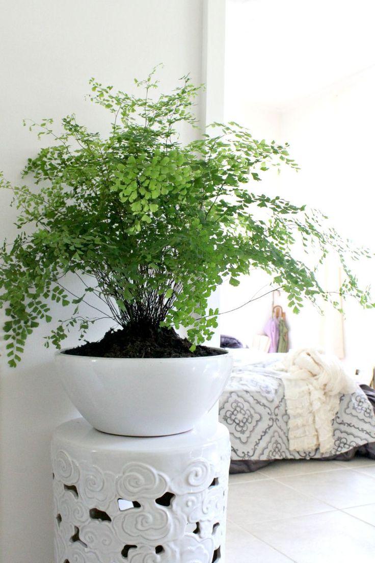 Комнатное растение с мелкими листьями