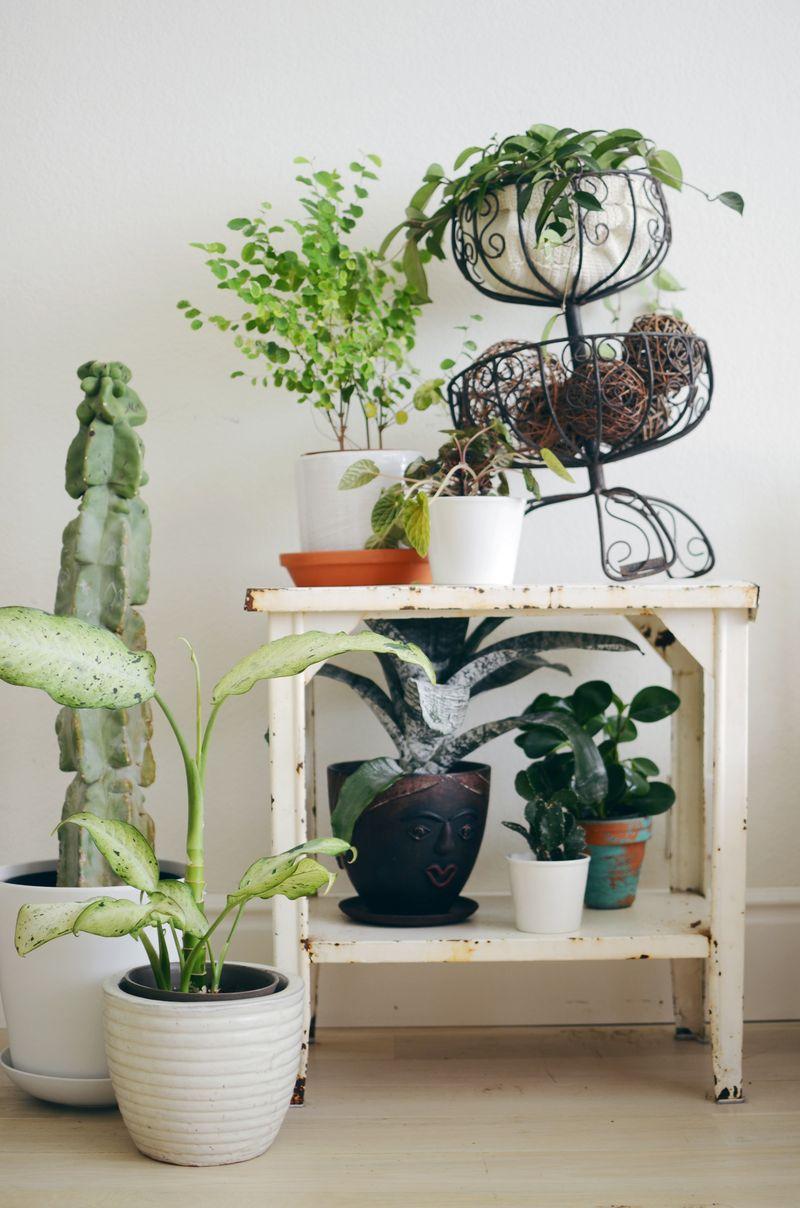 Комнатные растения в стиле шебби-шик