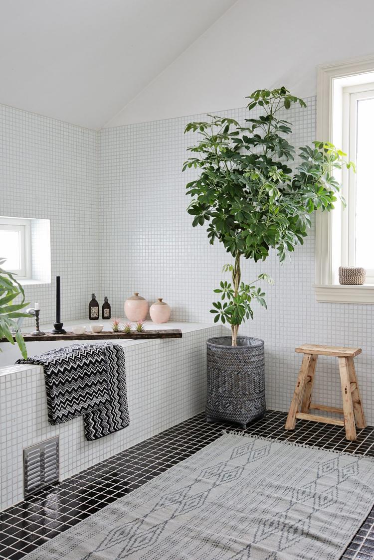 Шефлера в ванной