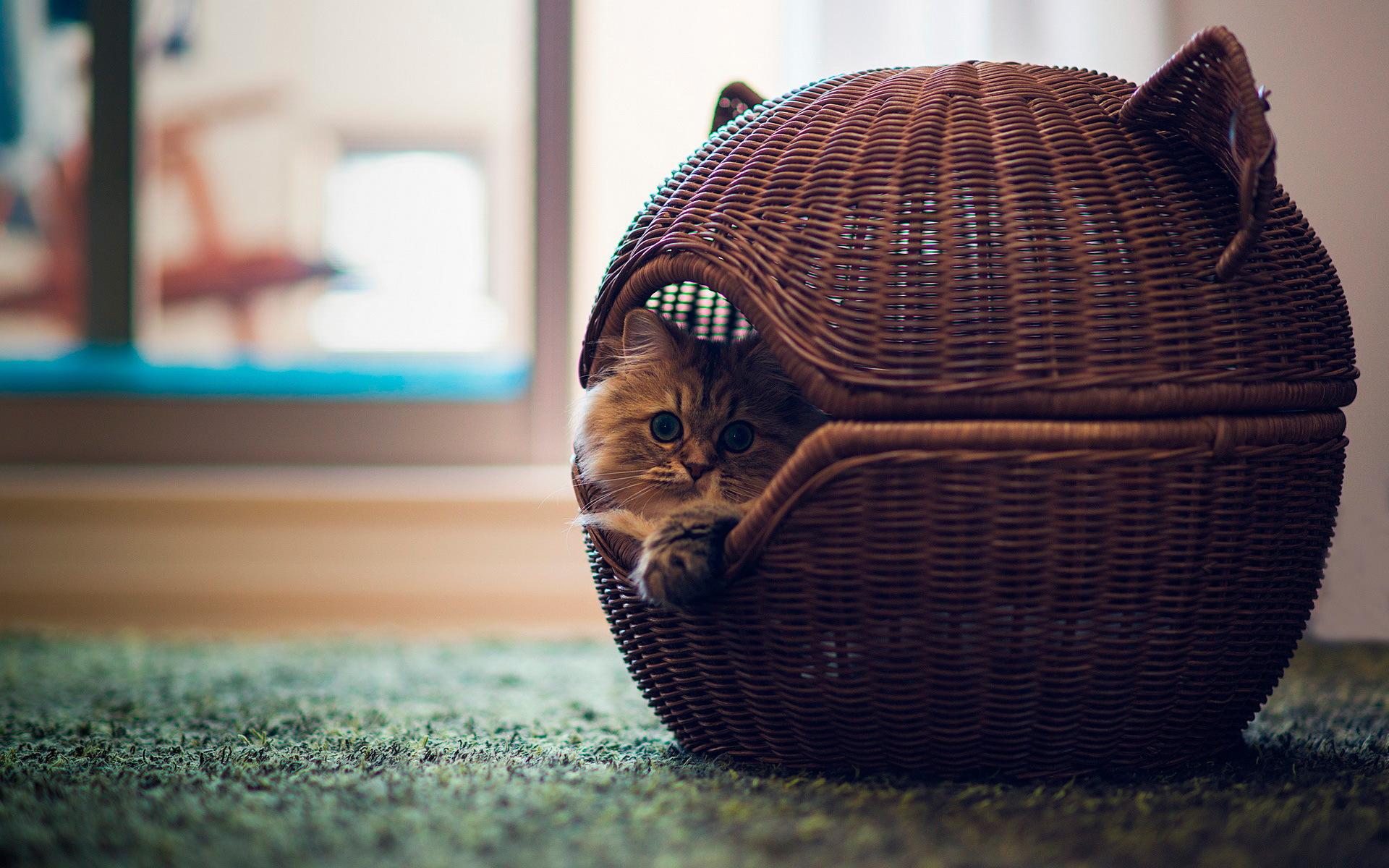 Плетеный домик для кошки