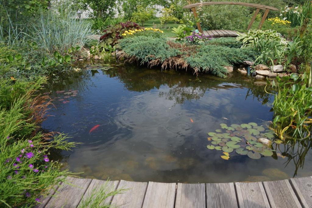 Пруд в саду с водными клумбами и рыбами