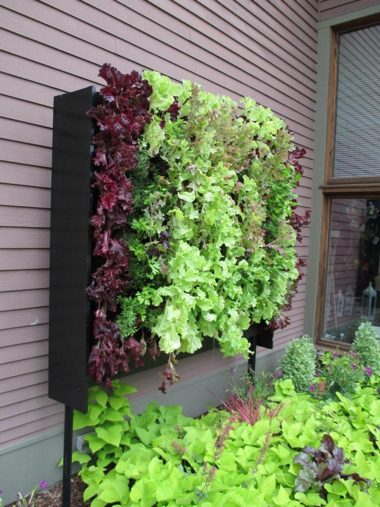 Красивые пряные травы и салат на даче