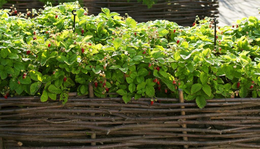Плетеный декоративный заборчик для ягод