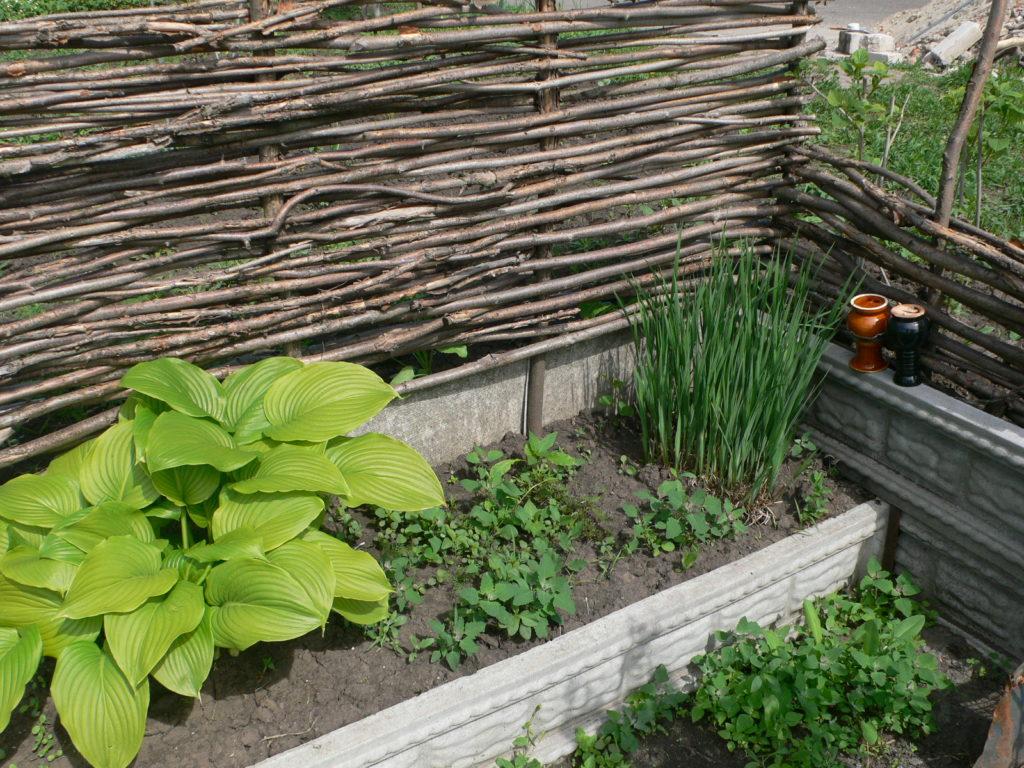 Плетень от ветра для растений