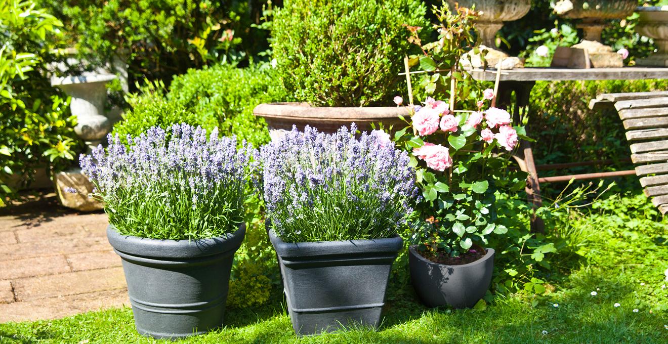 Цветы в кашпо в саду