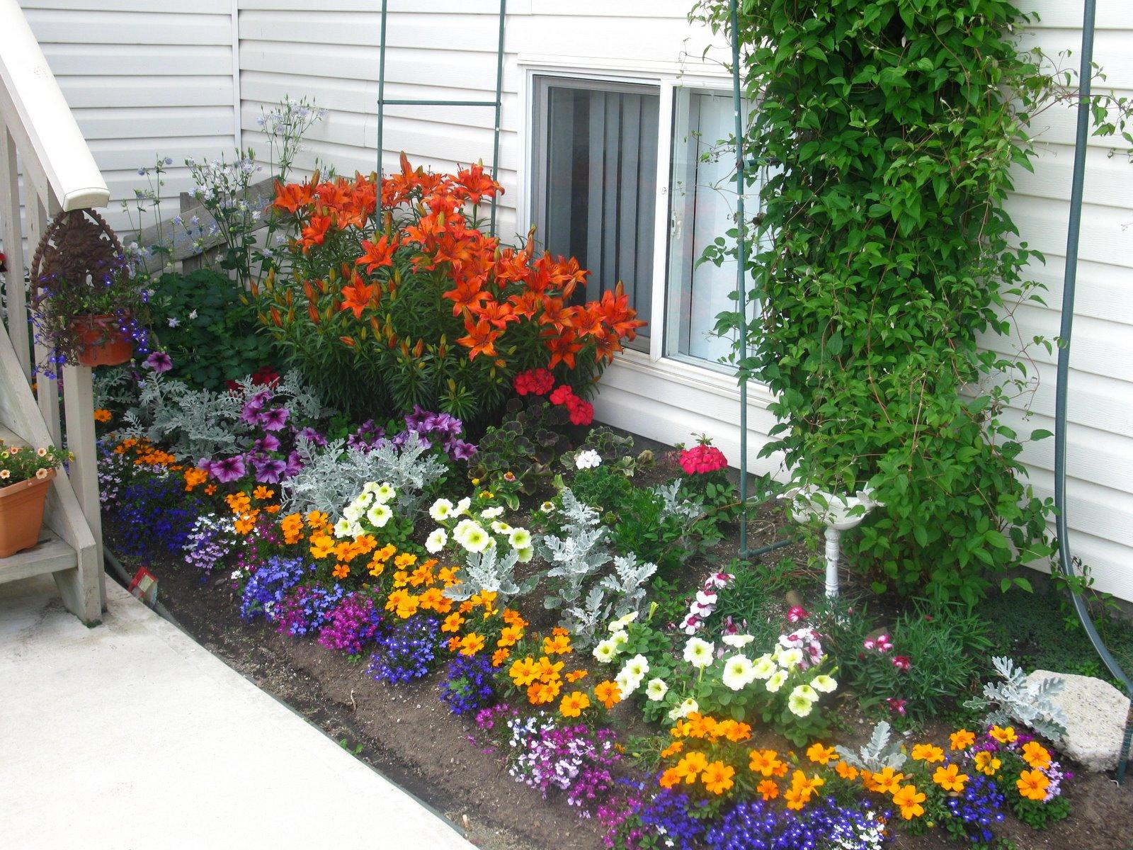 Разнообразие цветов на клумбе
