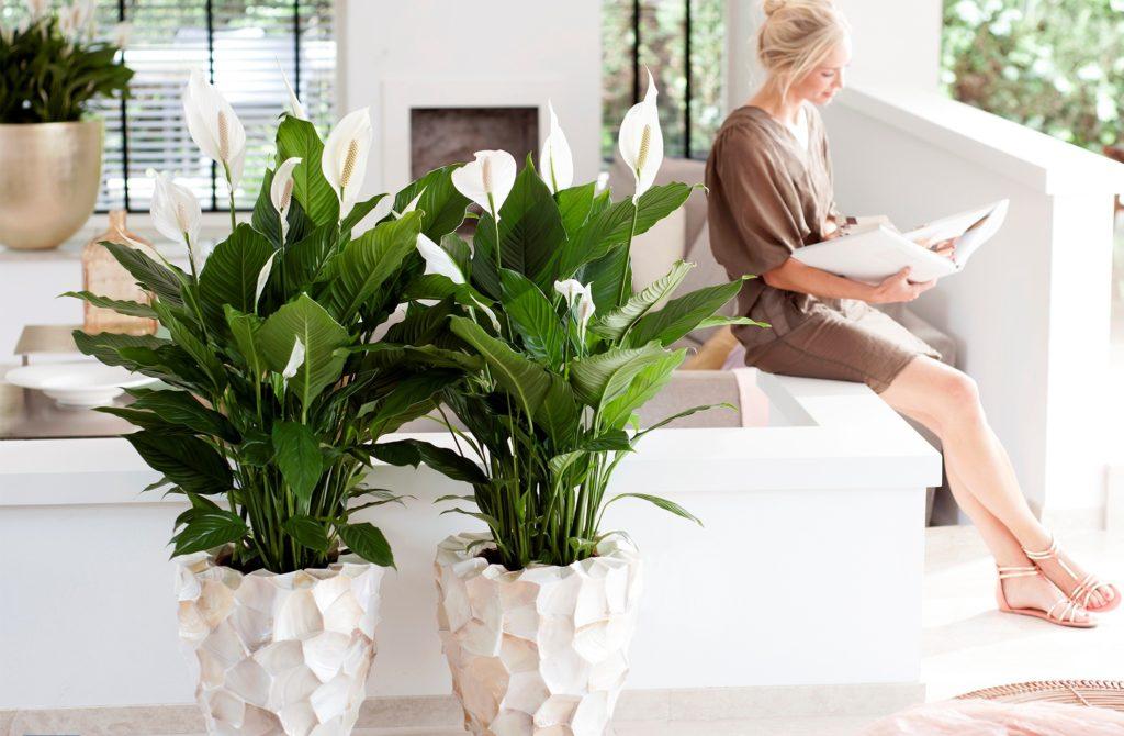 Красивые комнатные растения сделают террасу уютнее