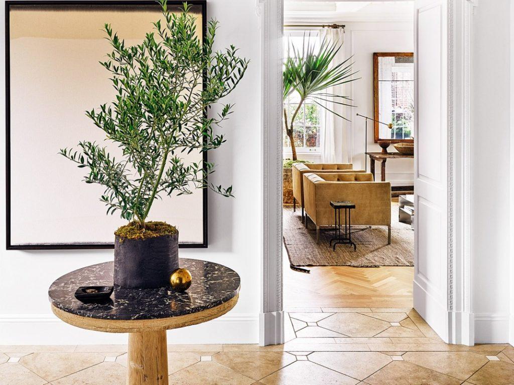 Красивые комнатные растения в интерьере квартиры