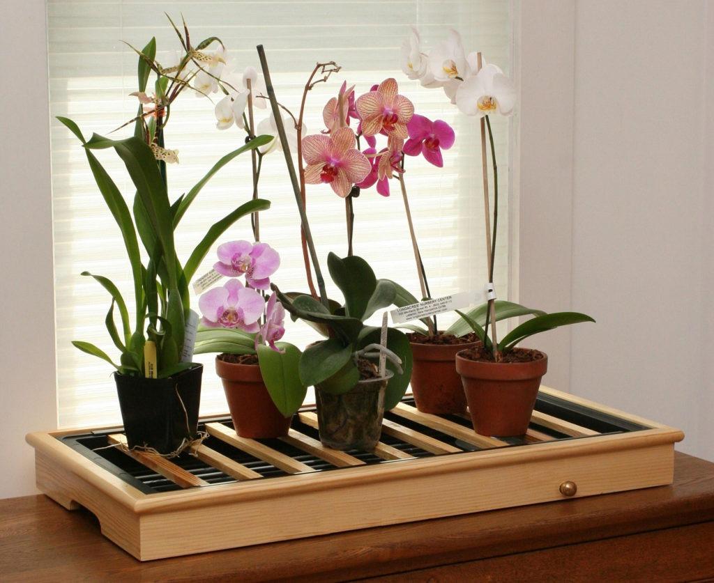 Красивые комнатные цветы в горшках на подставке