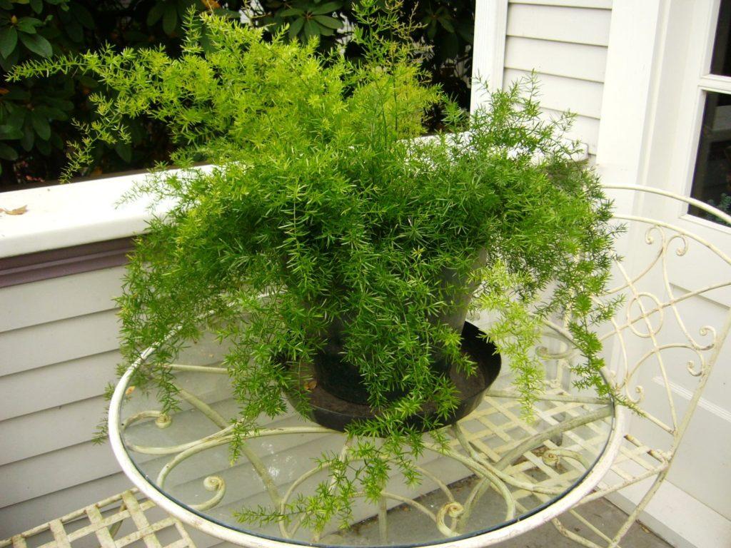 Летом растения можно размещать на веранде