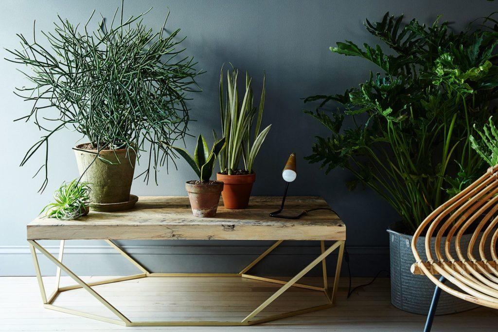 Свободный стол могут занять комнатные деревья и цветы
