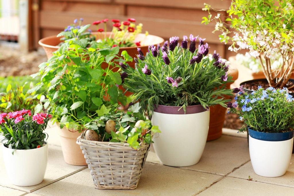 Комнатные цветы в маленьких горшках