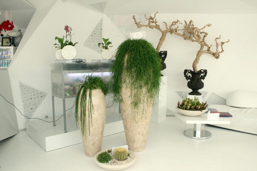 Украсьте свое жилище разными растениями