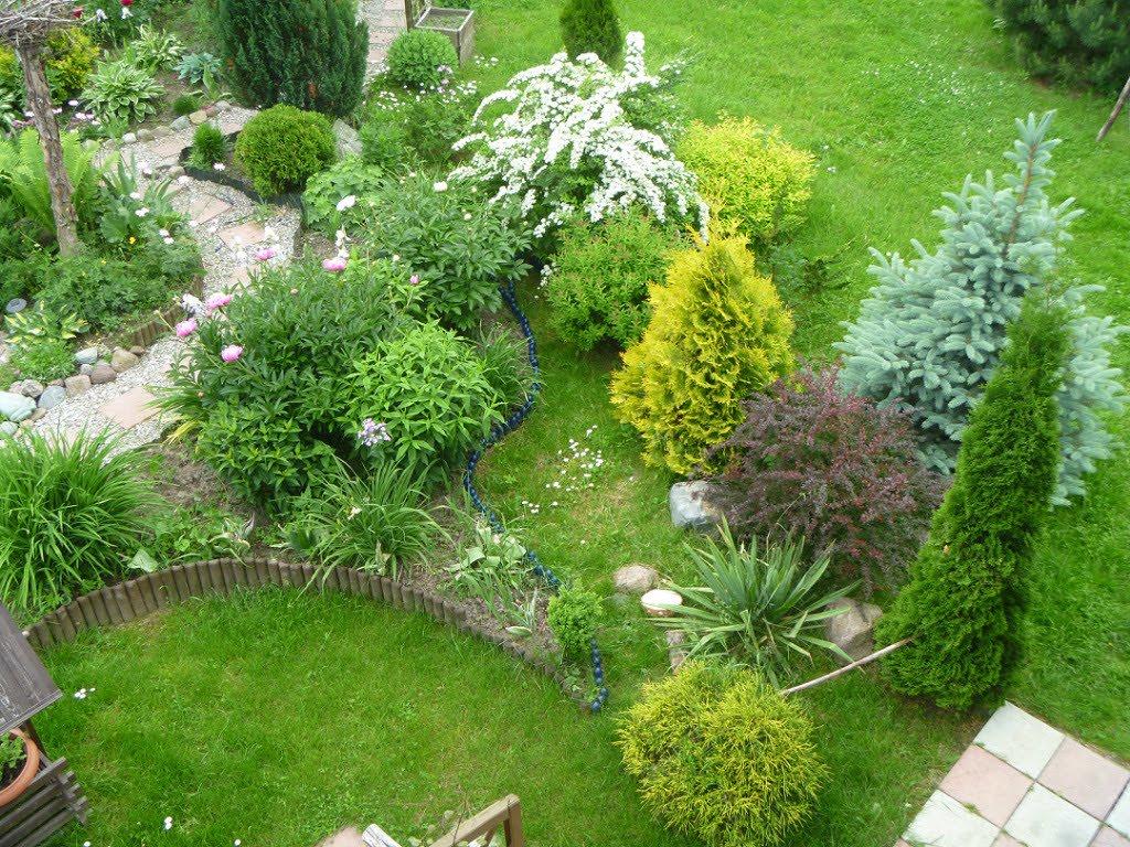Хвойные растения в саду с декоративными заборчиками