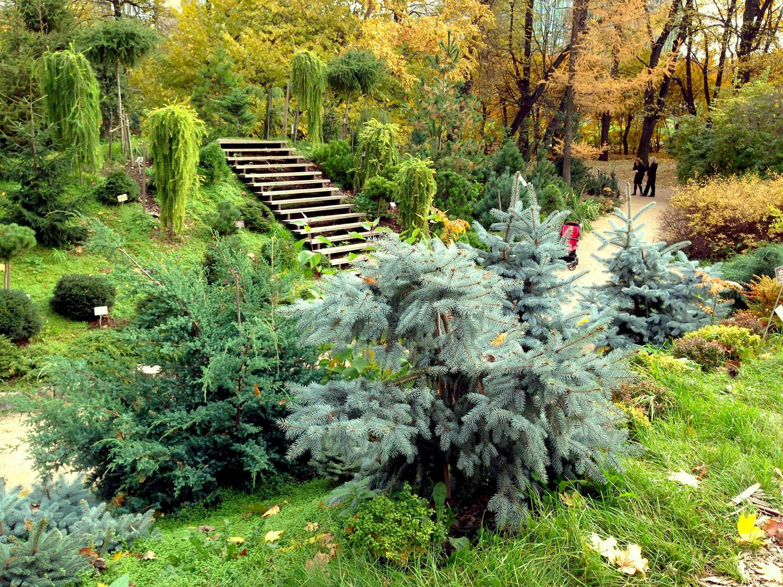 Большой сад с хвойными и лиственными растениями