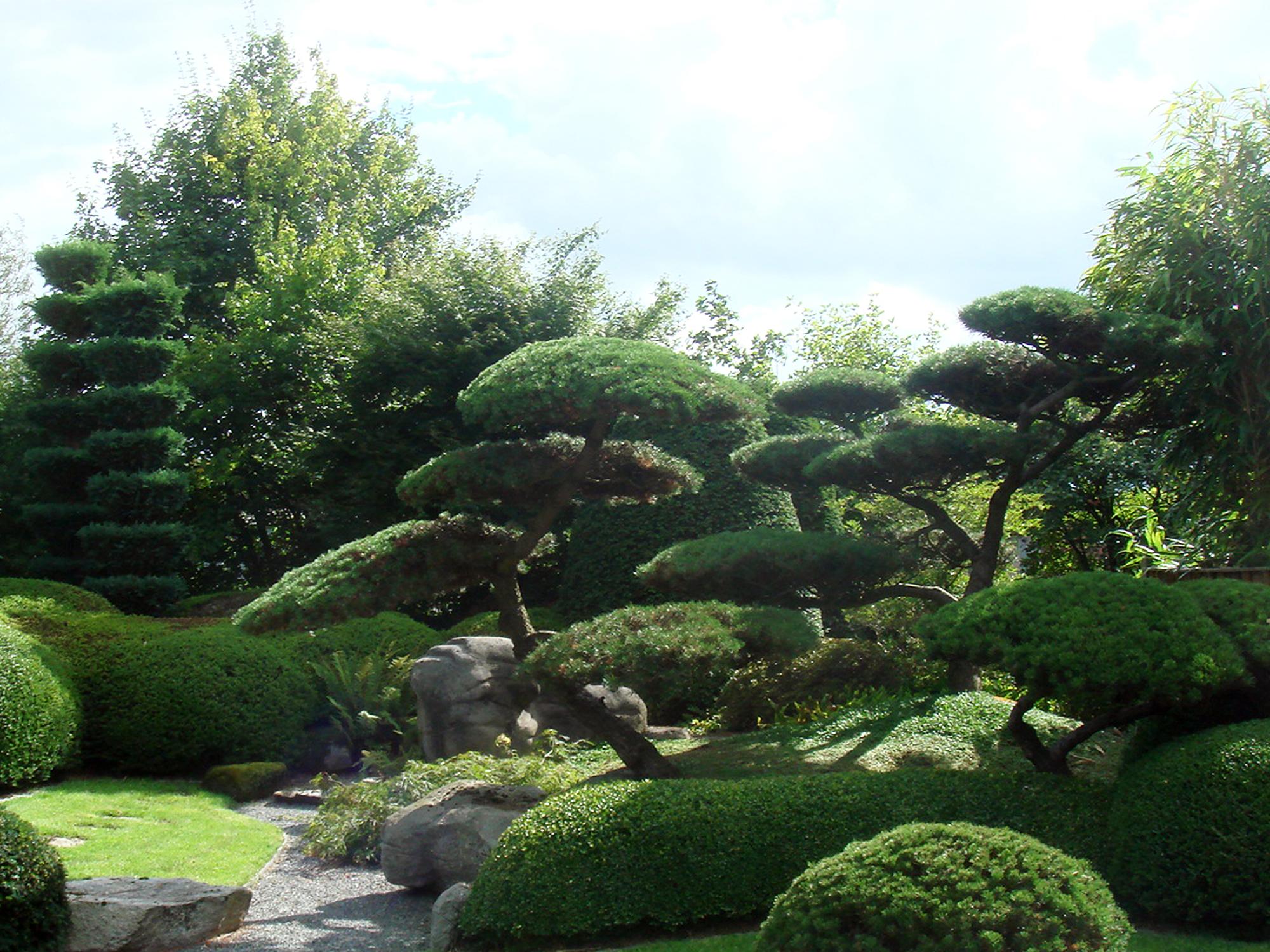 Красивые ухоженные хвойные растения в саду