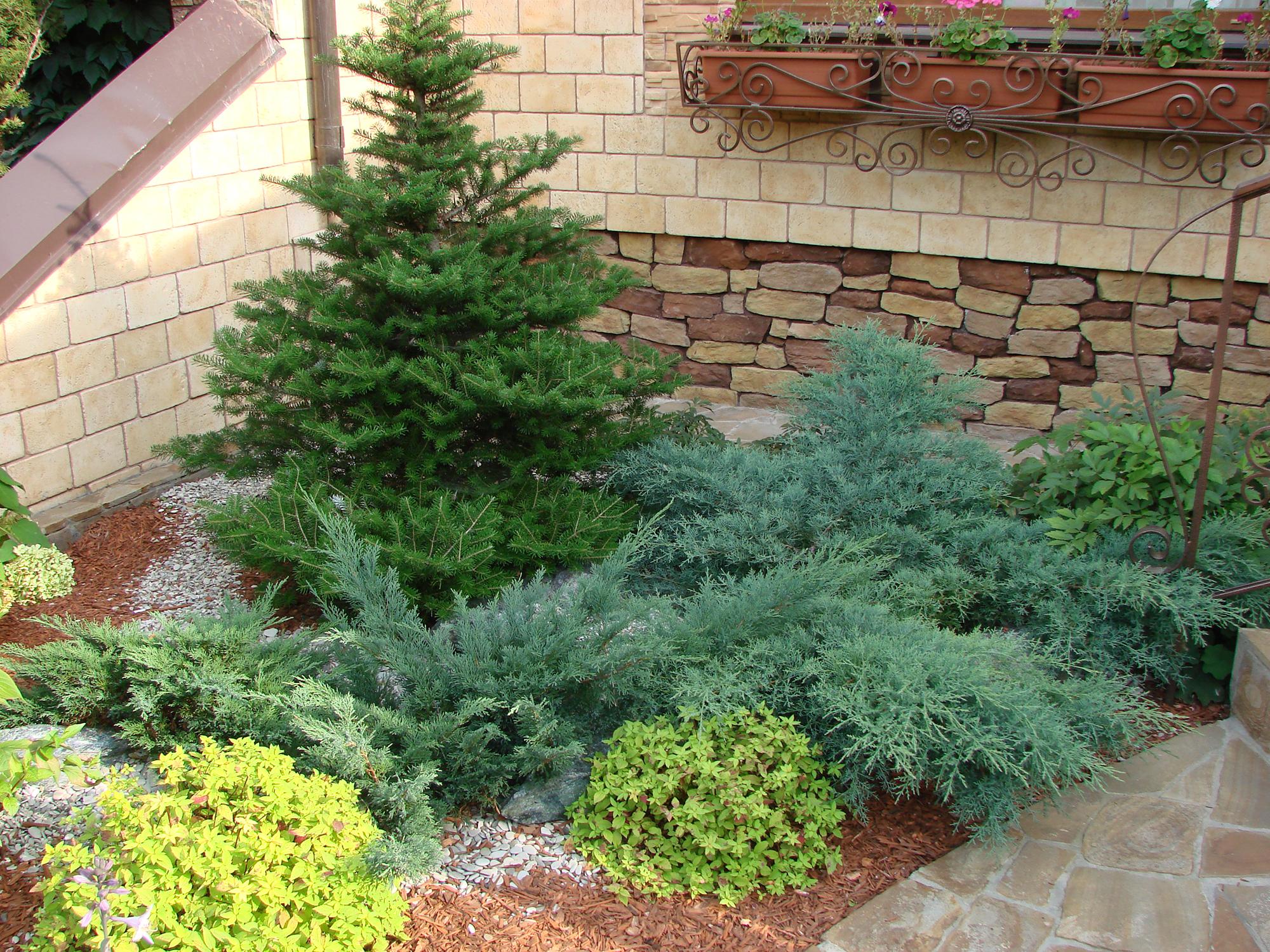 Хвойные деревья у лестницы загородного дома