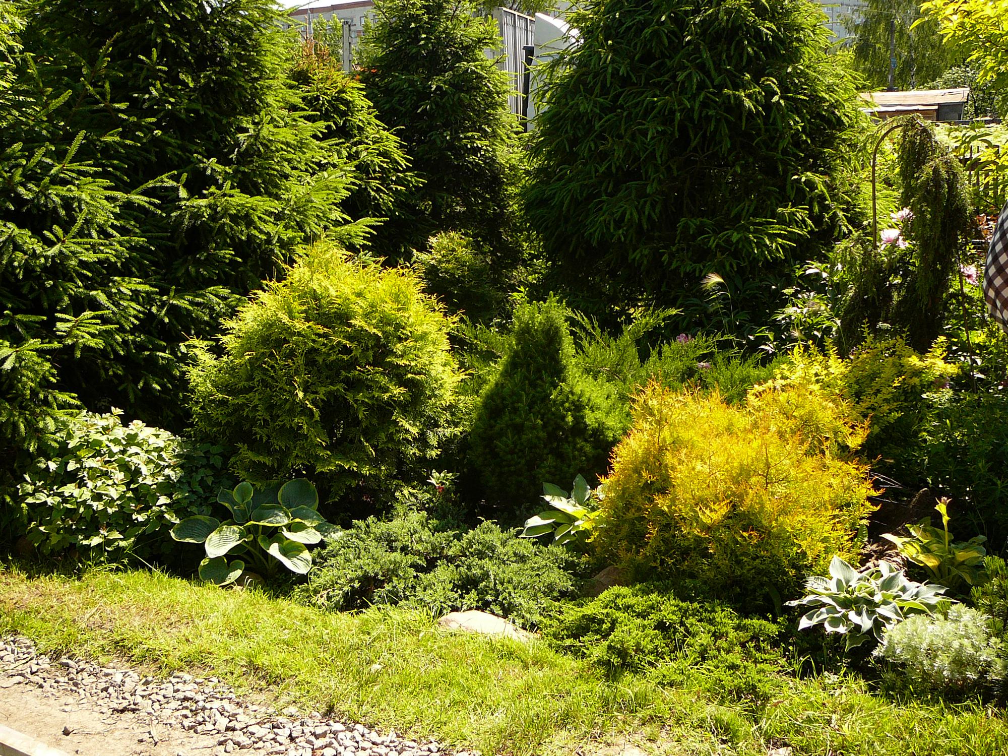 Тропинка и хвойные деревья в ландшафтном дизайне