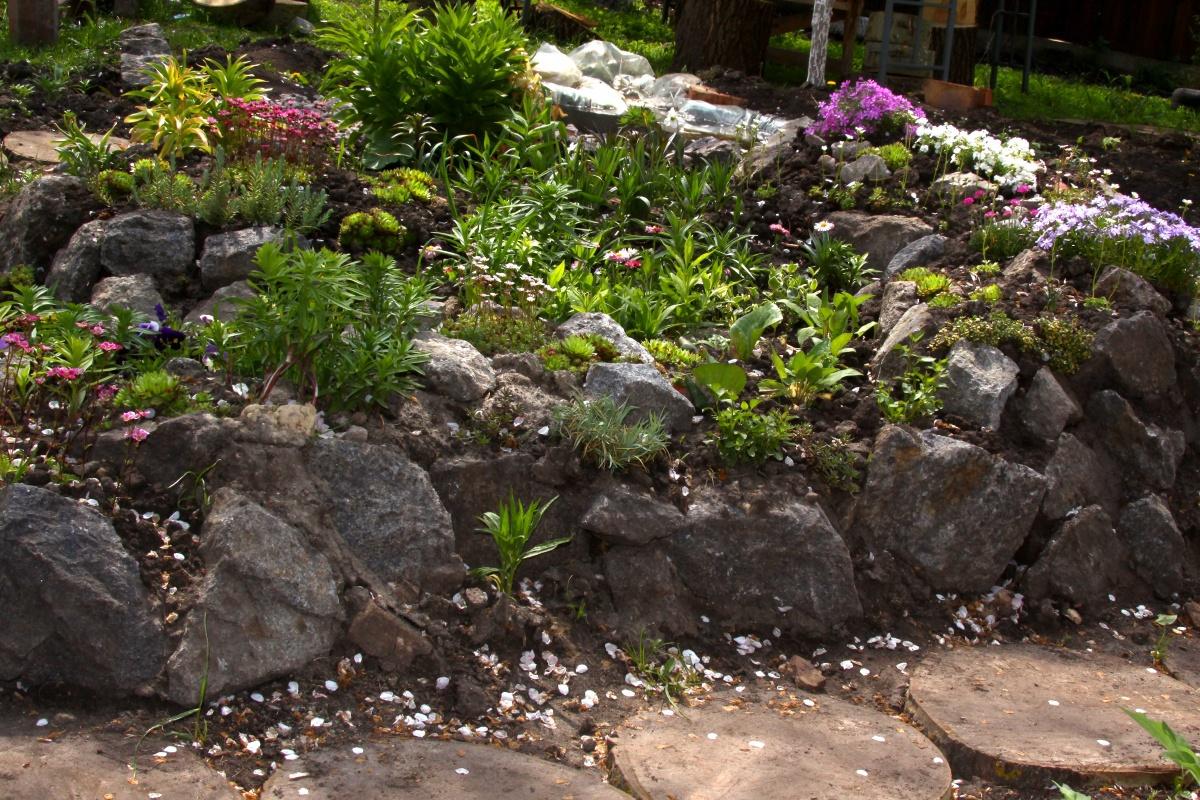 Красивые цветы и растения на альпийской горке
