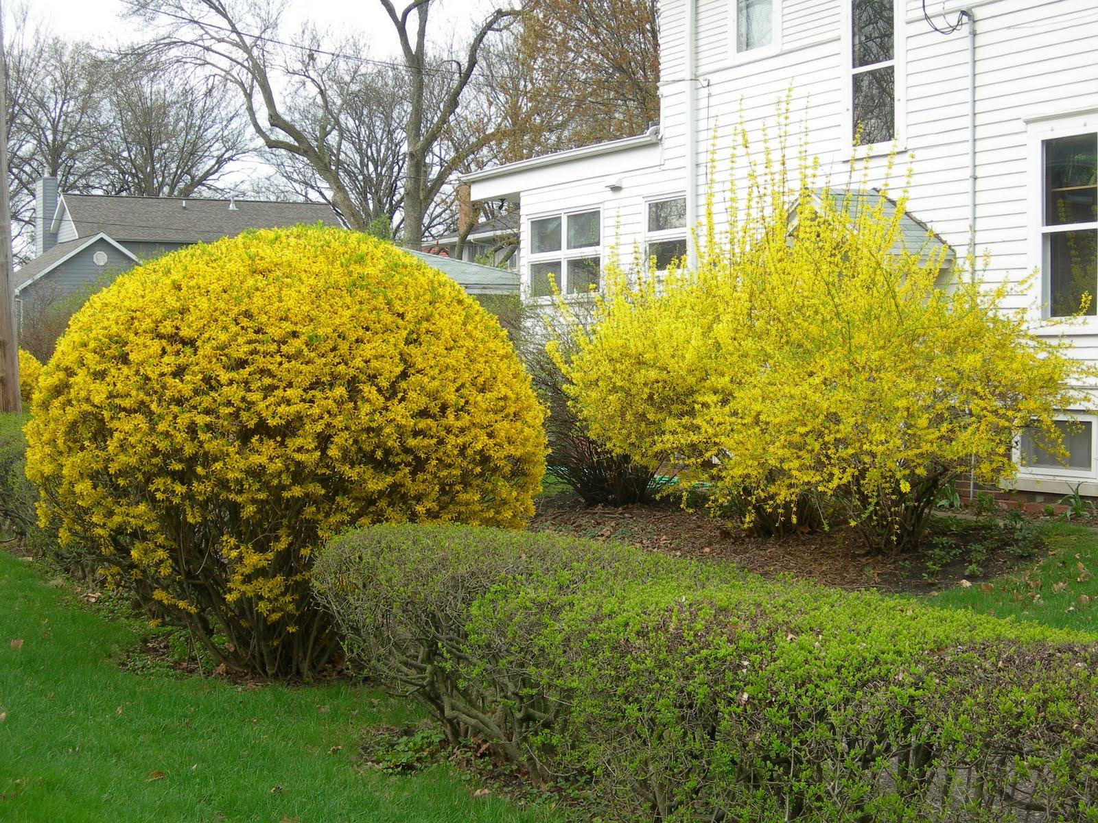 Красиво оформленные кустарники около дома