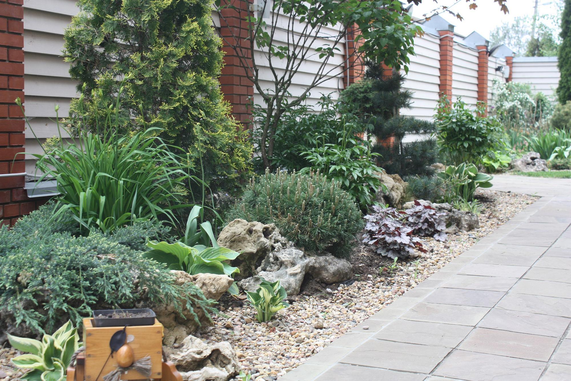 Хвойные и лиственные растения в дизайне участка