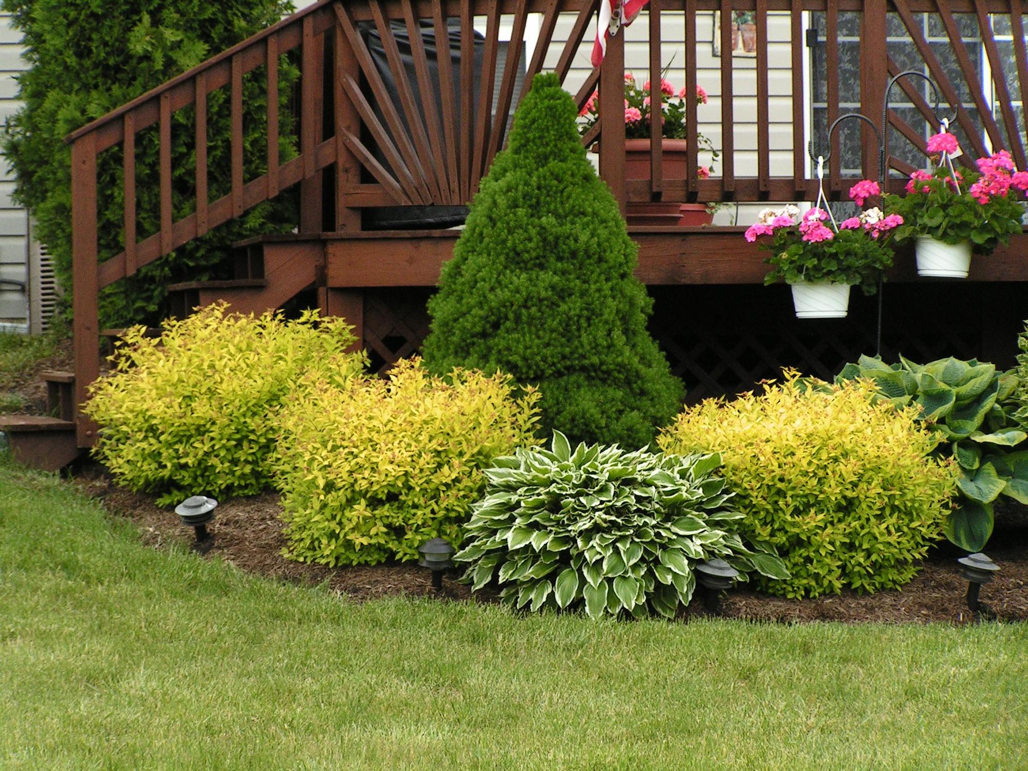 Красивая композиция из кустарников около лестницы дома