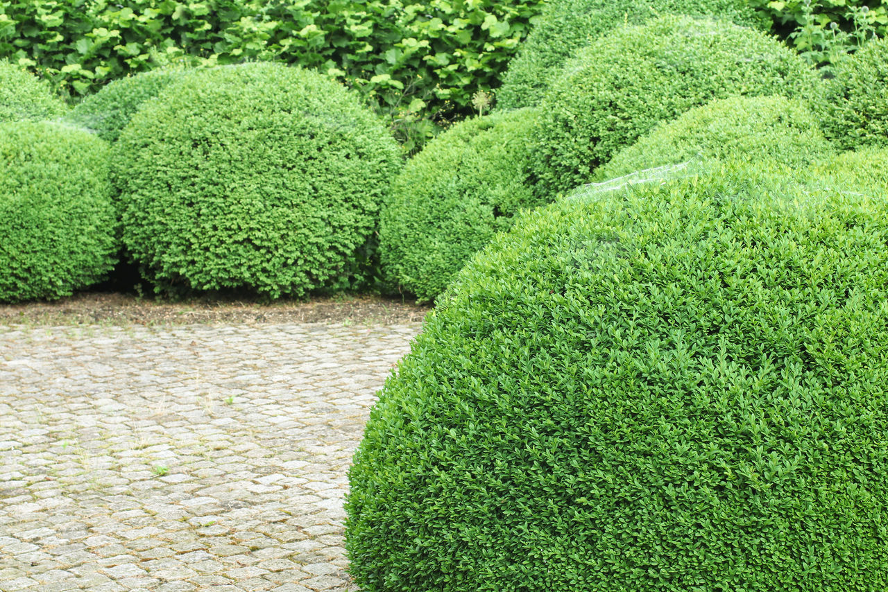 Круглые зеленые кусты