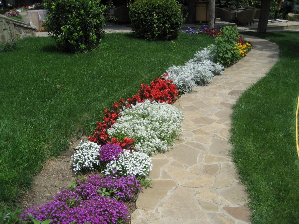 Красивые цветы для разделения зон дорожки и газона