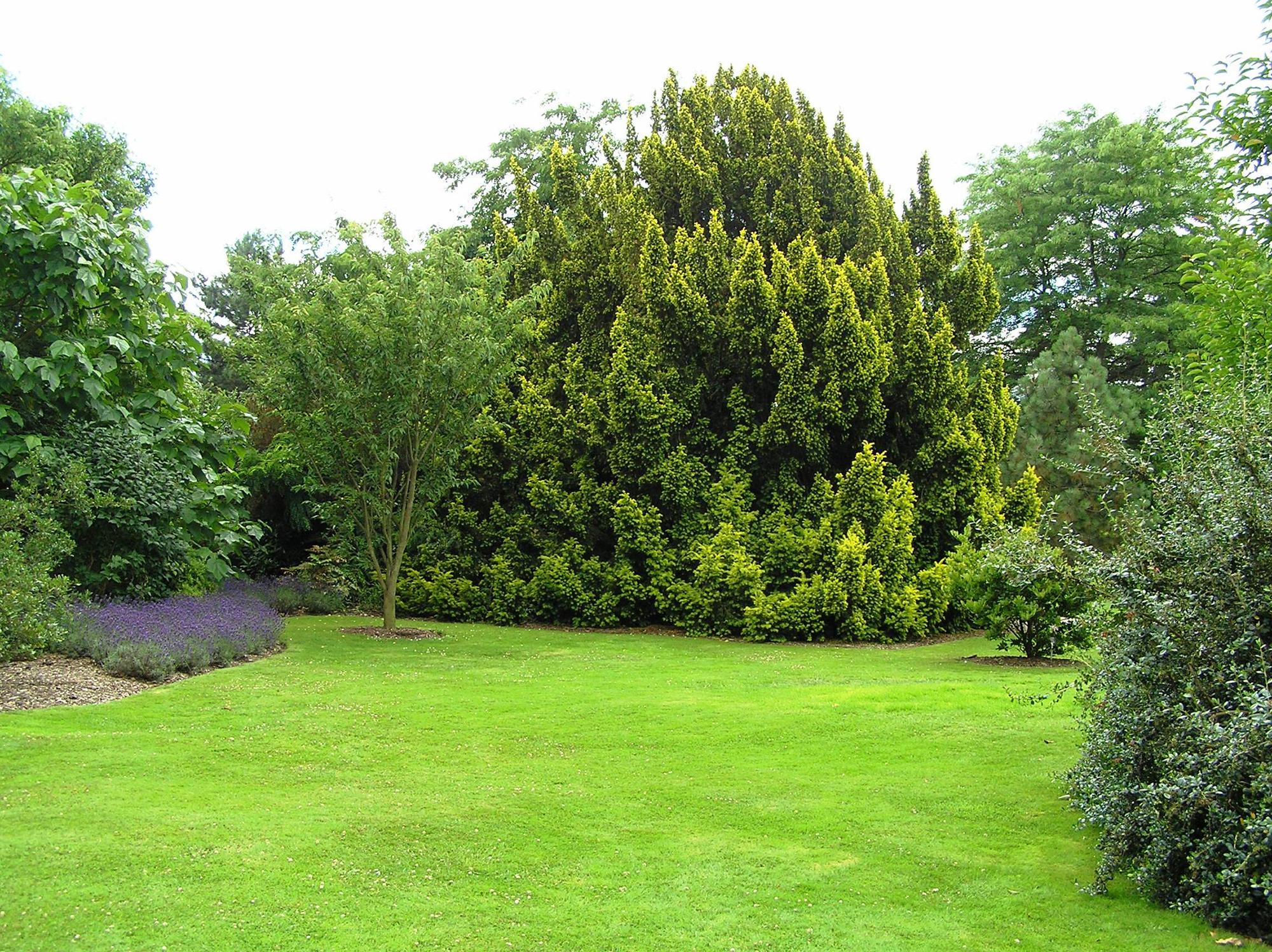 Газон и деревья на участке