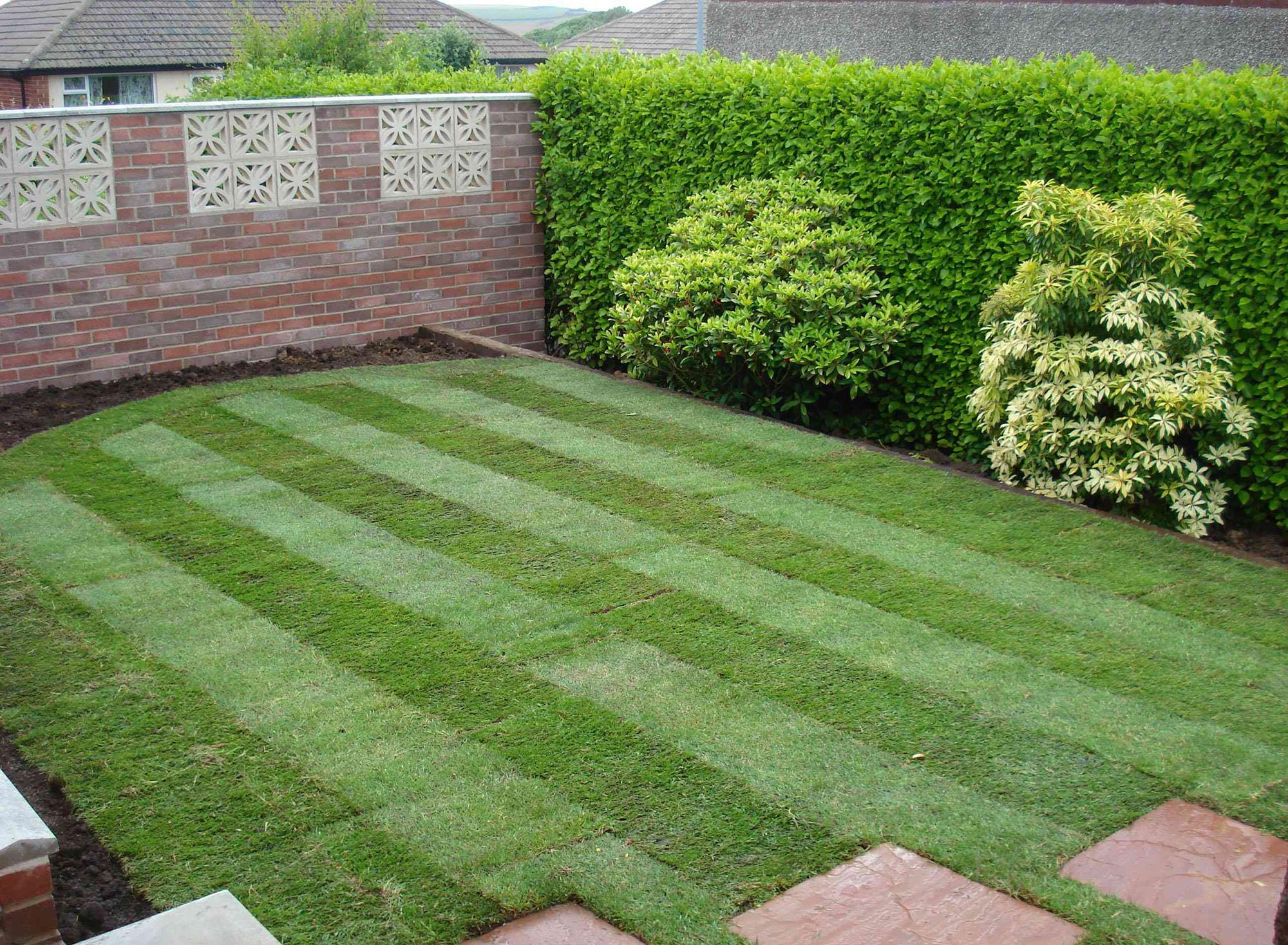Уложенный свежий газон