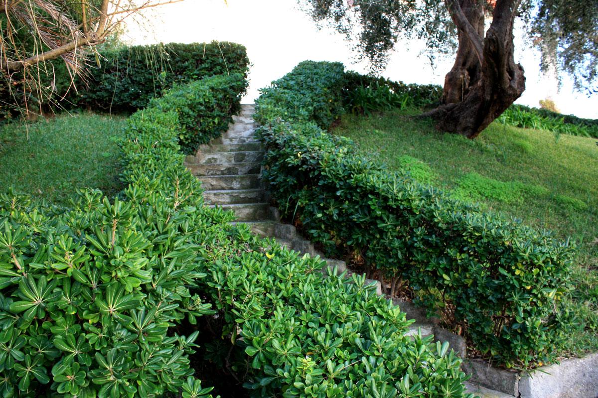 Живая изгородь из декоративных кустарников