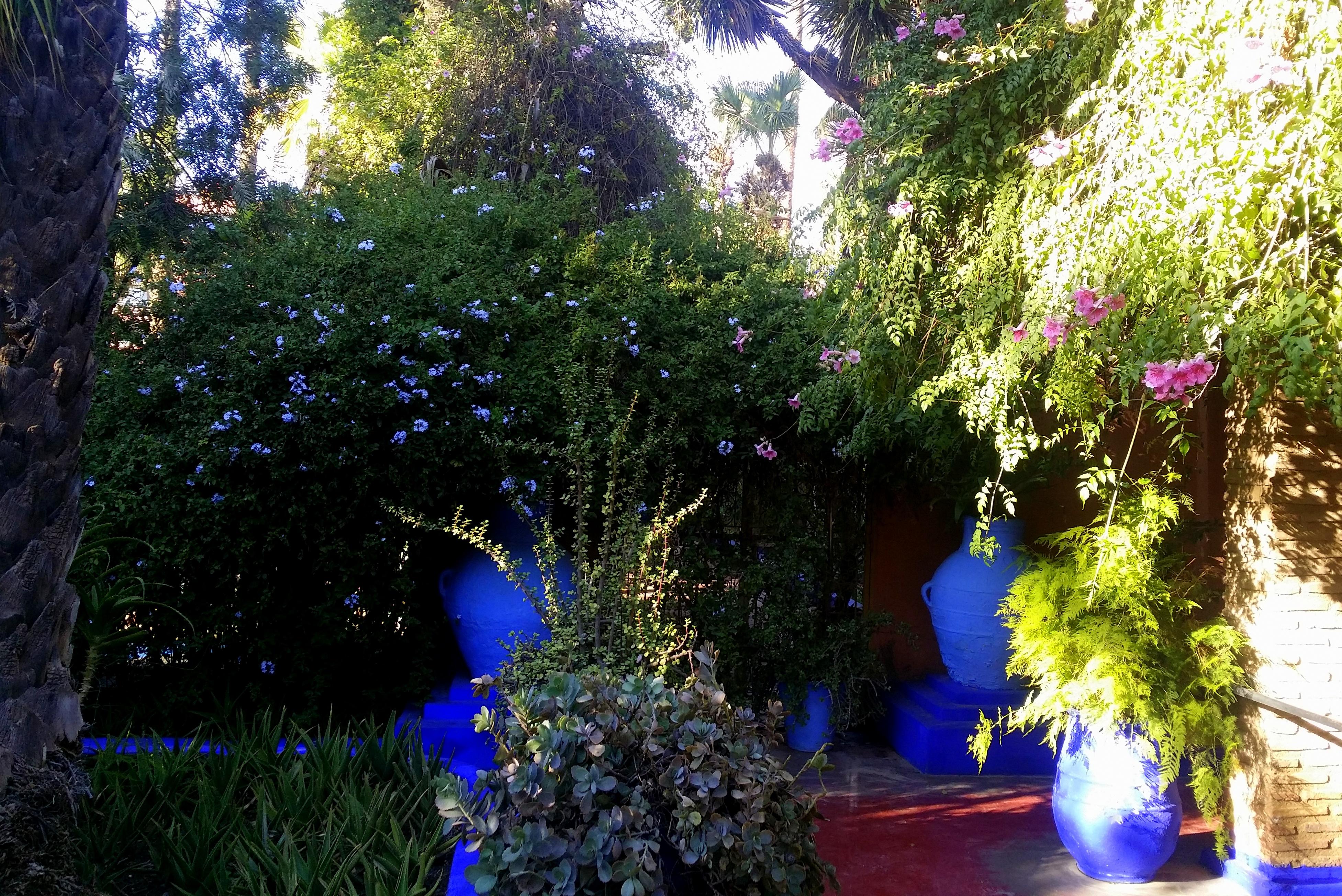 Декоративные кустарники на заборе