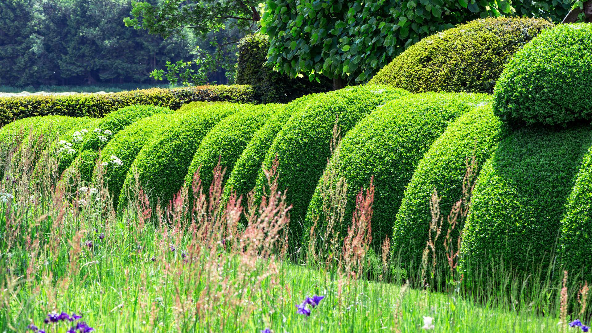 Зеленые декоративные кустарники