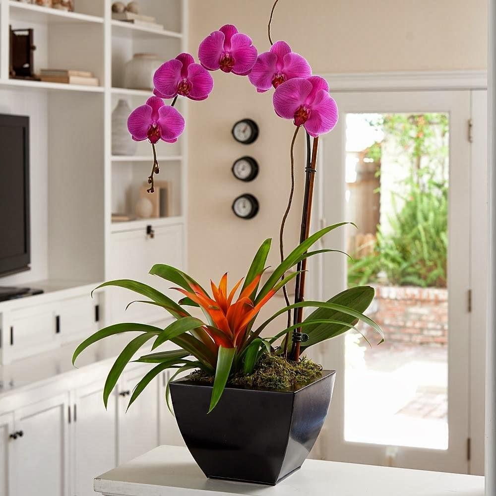Ярко-розовая орхидея в интерьере