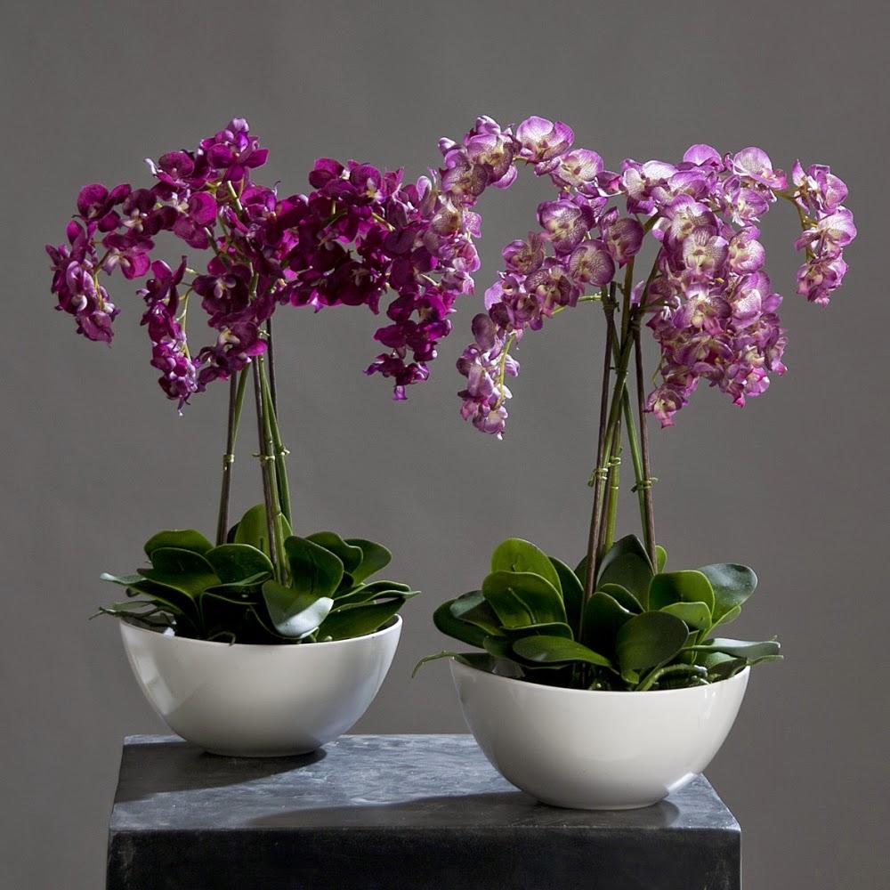 Ярко-розовые орхидеи в интерьере