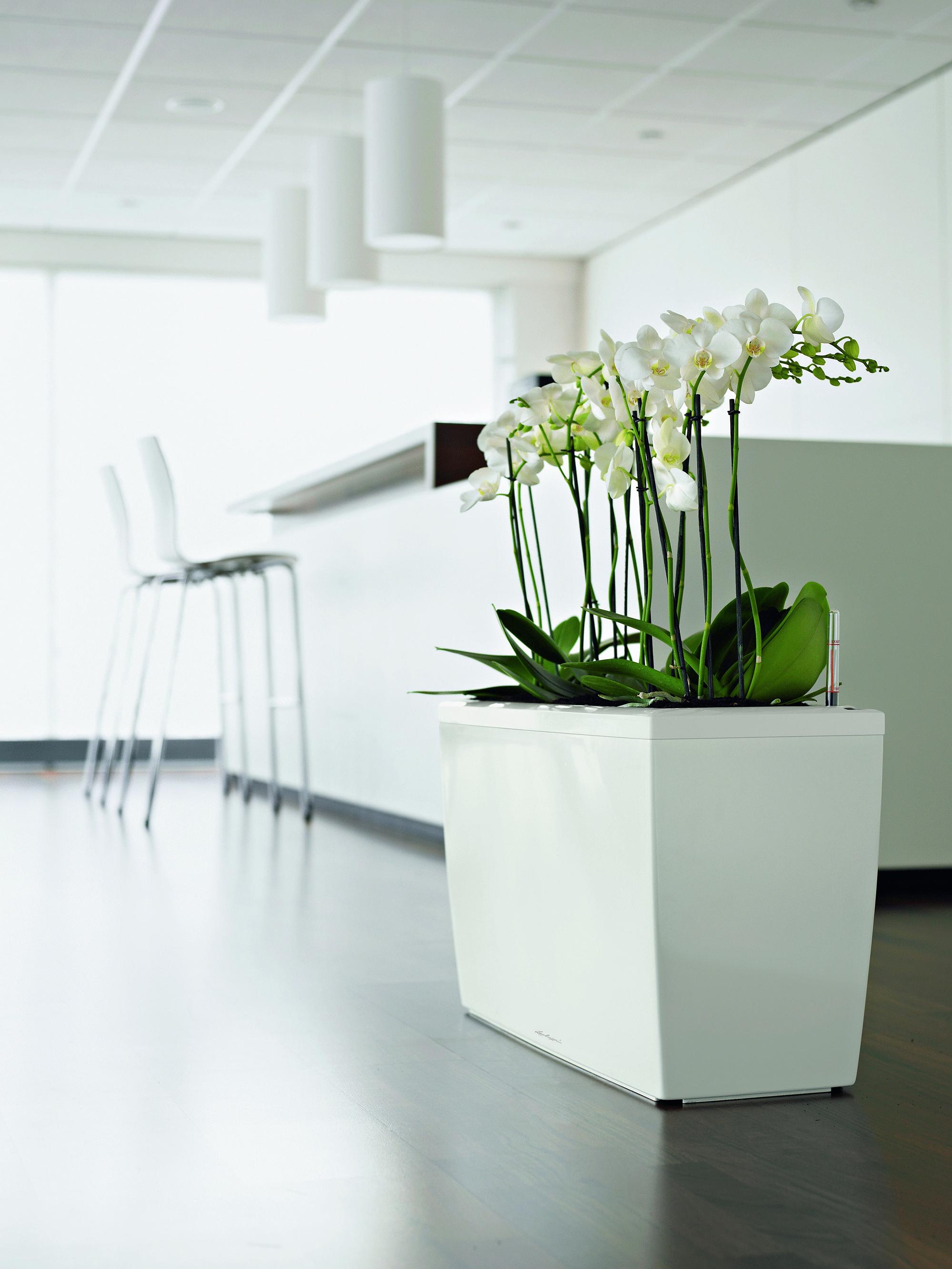 Белые орхидеи в напольном горшке