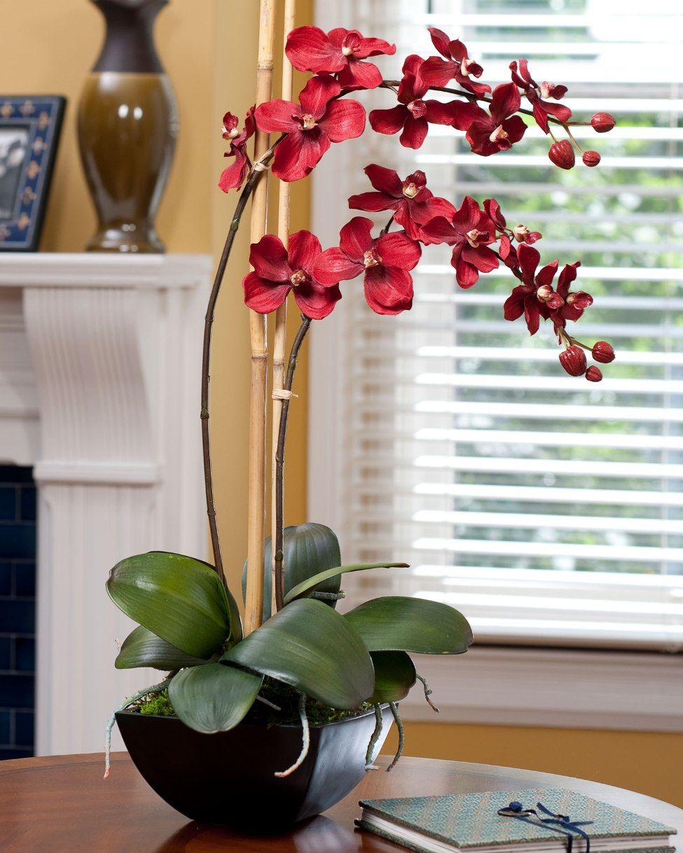 Красная орхидея в гостиной
